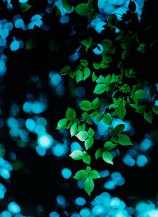 新緑と木漏れ日の写真素材 [FYI01639268]