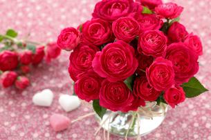 小さな赤いバラの写真素材 [FYI01639426]