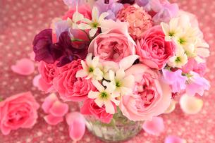 バラ ピンクイブピアッチェの写真素材 [FYI01639466]