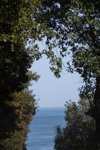 葉っぱと海の写真素材 [FYI01639875]