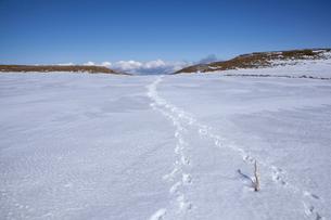 雪原と足跡の写真素材 [FYI01639884]