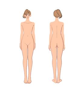 正面と後ろから見た女性のヌードのイラスト素材 [FYI01639994]
