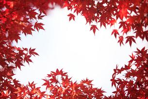 紅葉の写真素材 [FYI01640145]