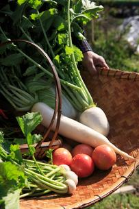 かごに置いた野菜の写真素材 [FYI01640504]