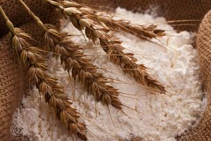小麦粉と小麦の写真素材 [FYI01640567]