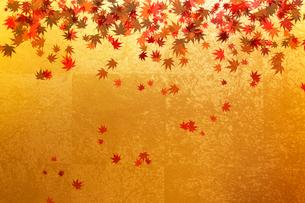 金屏風と紅葉の葉のイラスト素材 [FYI01640726]
