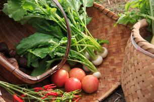 かごに置いた野菜の写真素材 [FYI01640729]
