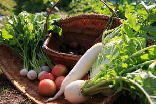 かごに置いた野菜の写真素材 [FYI01640876]