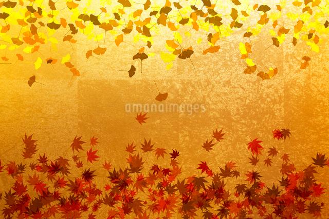 金屏風と紅葉の葉のイラスト素材 [FYI01640878]