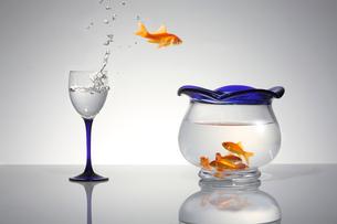 ジャンプする金魚の写真素材 [FYI01641170]
