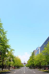 御堂筋と新緑の銀杏の写真素材 [FYI01641206]