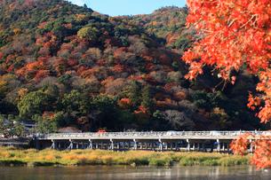 紅葉と渡月橋の写真素材 [FYI01641371]