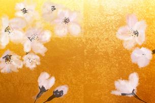 金屏風と桜(フォトイラスト)のイラスト素材 [FYI01641455]