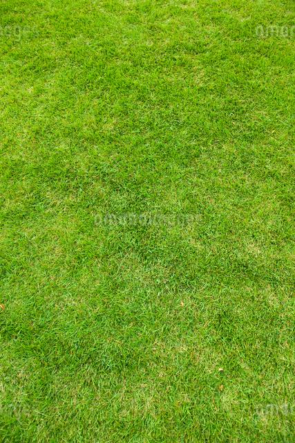 芝生の写真素材 [FYI01641667]