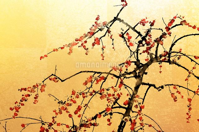 梅と金屏風(フォトイラスト)のイラスト素材 [FYI01641817]