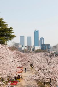 桜と大阪ビジネスパークの写真素材 [FYI01641918]