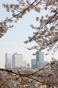 桜とビルの写真素材 [FYI01641959]