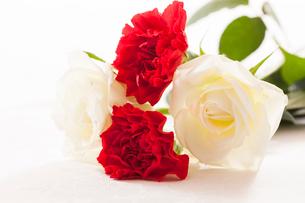 カーネーションと白いバラの花の写真素材 [FYI01642021]