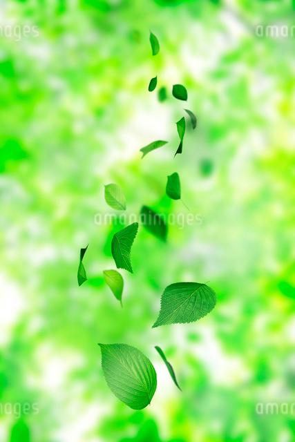 舞い散る葉っぱの写真素材 [FYI01642421]