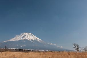 朝霧高原から見た富士山の写真素材 [FYI01642761]