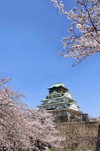 大阪城と桜の写真素材 [FYI01642904]