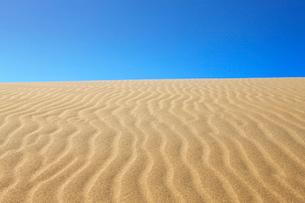 鳥取砂丘の写真素材 [FYI01642953]