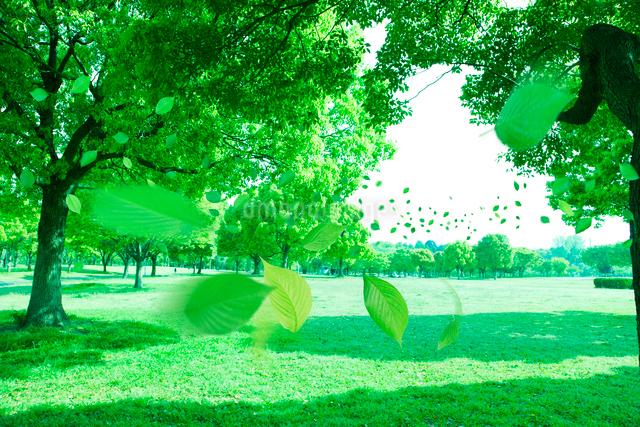 新緑の公園と舞い散る若葉の写真素材 [FYI01643009]
