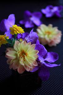 黒いクロス布の上の花の写真素材 [FYI01643187]