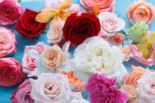 ランダムに並んだ色とりどりの花々の写真素材 [FYI01643253]
