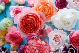 ランダムに並んだ色とりどりの花々の写真素材 [FYI01643256]