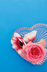 青い背景にガラスプレートの上のバラとアネモネの写真素材 [FYI01643295]