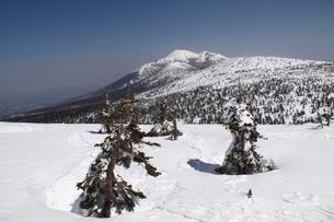 三石山の雪に沈むアオモリトドマツより望む岩手山の写真素材 [FYI01643512]