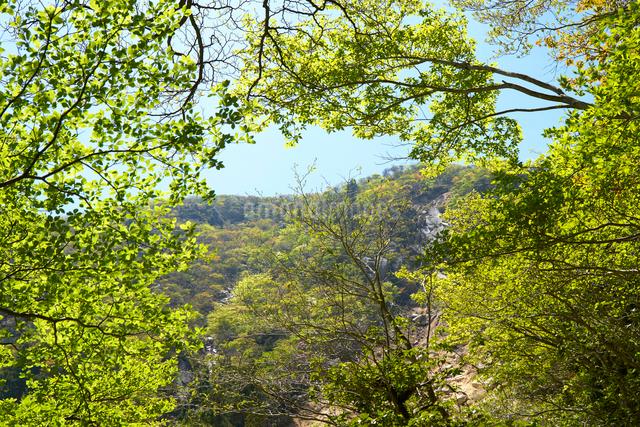 御在所岳登山道からの眺めの写真素材 [FYI01643754]