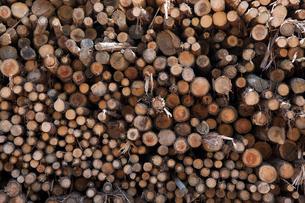 バイオマス用木材の写真素材 [FYI01643756]