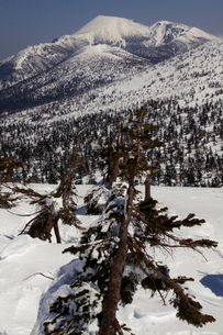 三石山の雪に沈むアオモリトドマツより望む岩手山の写真素材 [FYI01643912]