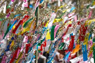 機物神社七夕祭りの写真素材 [FYI01643946]