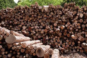 バイオマス用木材の写真素材 [FYI01643988]