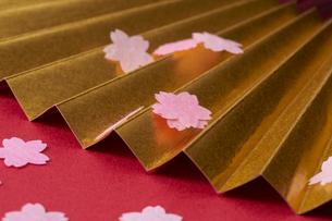 金の扇子と花びらの写真素材 [FYI01644043]