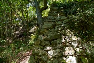 八幡山城跡の写真素材 [FYI01644055]