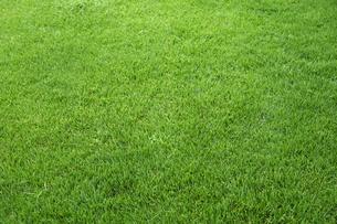 芝生の写真素材 [FYI01644274]
