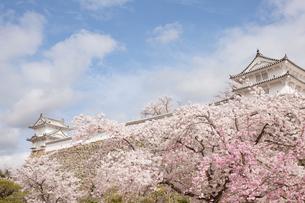 春の姫路城の写真素材 [FYI01644822]