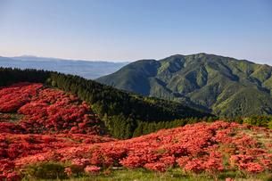 大和葛木山山頂のツツジと金剛山の写真素材 [FYI01644983]