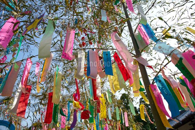 機物神社七夕祭りの写真素材 [FYI01645066]