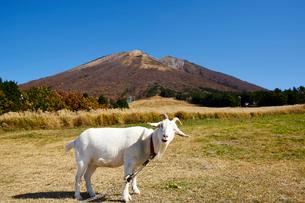 桝水原より望む大山の写真素材 [FYI01645435]