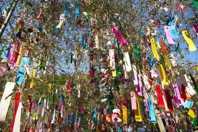 機物神社七夕祭りの写真素材 [FYI01645651]