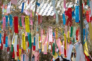 機物神社七夕祭りの写真素材 [FYI01645898]