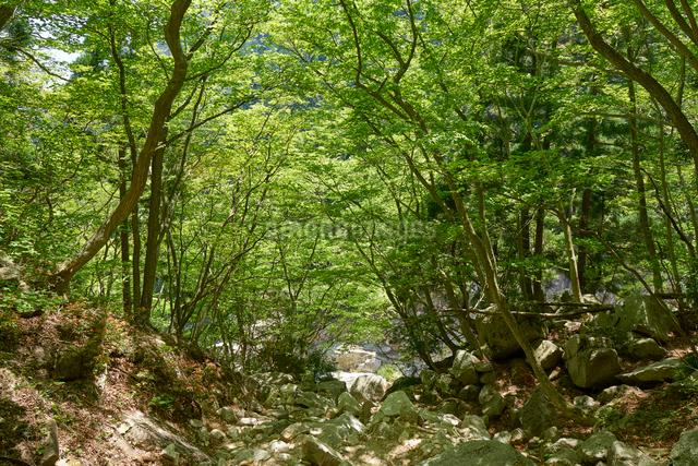 御在所岳登山道からの眺めの写真素材 [FYI01645979]