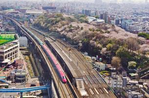 桜咲く東京を走る東北新幹線はやぶさと秋田新幹線スーパーこまちの写真素材 [FYI01646220]