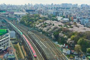 桜咲く東京を走る東北新幹線はやぶさと秋田新幹線スーパーこまちの写真素材 [FYI01646305]