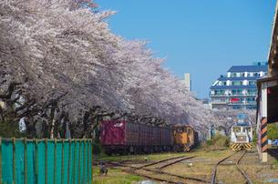 青空に桜並木と貨物列車の写真素材 [FYI01646376]